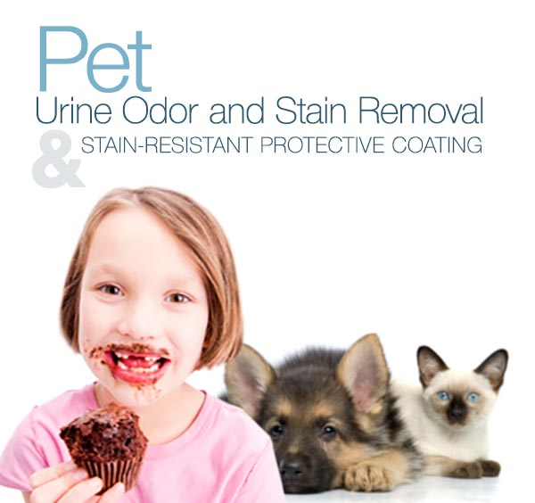 Stain Protector Treatment